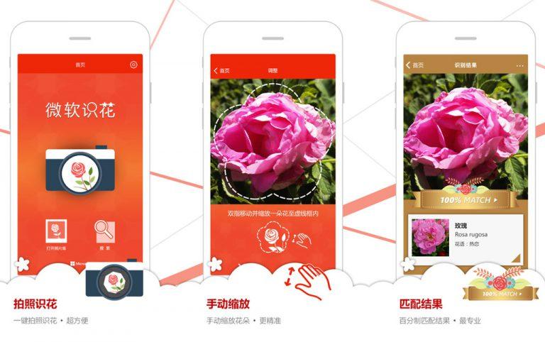 Kenali Jenis Bunga ala 'Shazam' dengan Aplikasi Microsoft Flower Recognition
